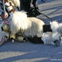 carnival-boes-e-merdules_4
