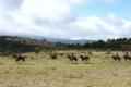 "Horse riding tour ""Lohana"""